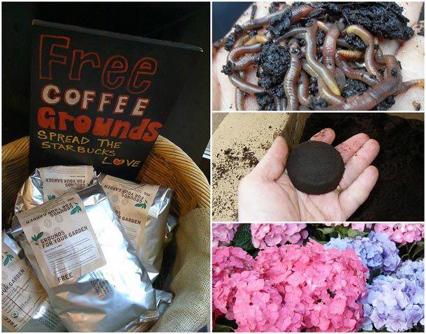 10 Façons d`utiliser Genius vieux marc de café dans votre jardin