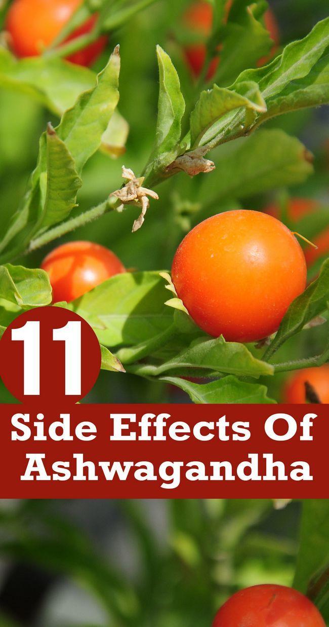 11 Effets secondaires inattendus de ashwagandha