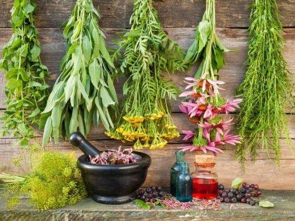 12 Plantes médicinales dont vous avez besoin de grandir dans votre jardin médicinal