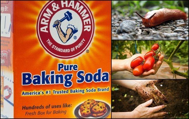 13 Meilleures utilisations pour le bicarbonate de soude dans le jardin