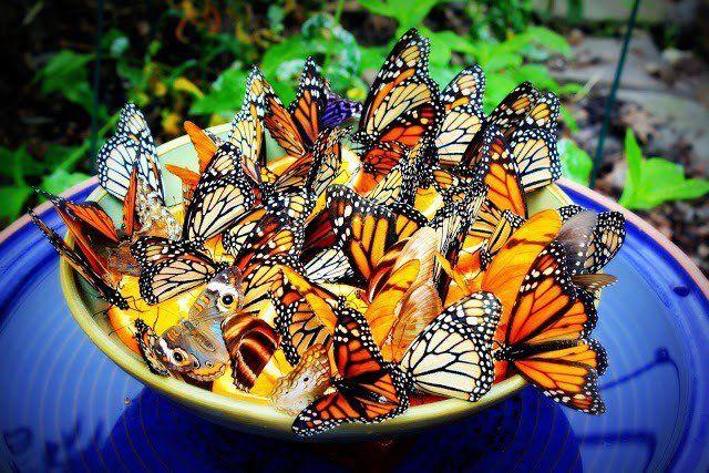 14 Belles mangeoires papillon diy pour faire de votre jardin un paradis de papillon
