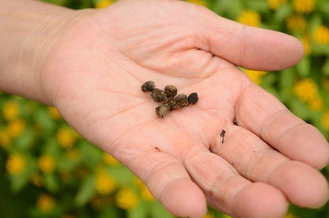 15 Secrets de départ de semences avancées vous ne serez pas apprendre au centre de jardin