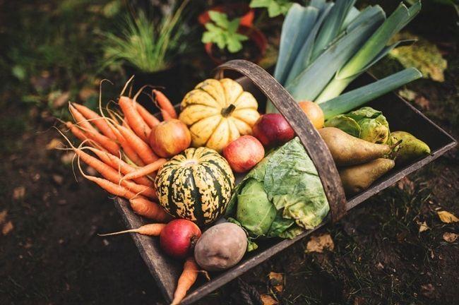 17 Secrets organiques pour Turbocharge votre récolte de jardin