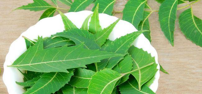 18 Avantages étonnants de feuilles de neem pour la peau, les cheveux et la santé