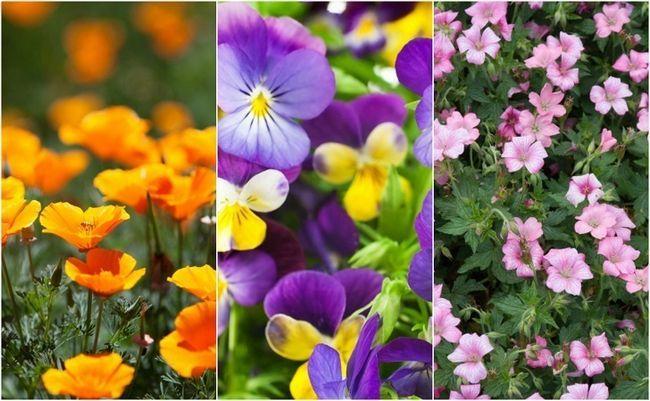 18 Et les plus belles Easiest fleurs tout le monde peut se développer dans leur jardin