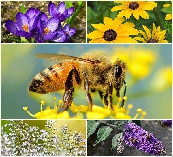 20 Belles fleurs pour attirer les abeilles dans votre jardin
