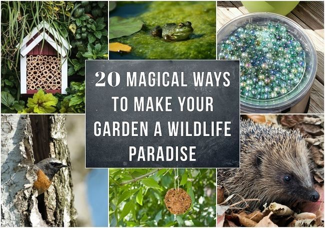 20 Façons magiques pour faire de votre jardin un paradis de la faune
