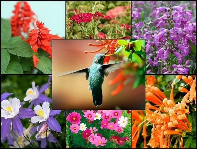 21 Plantes de jardin Glorieuses qui attirent les colibris