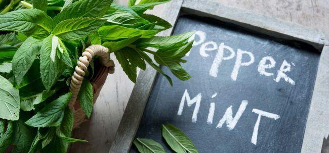 23 Avantages étonnants de feuilles de menthe pour la peau, les cheveux et la santé