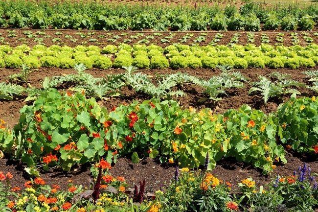 5 Astuces instantanées pour augmenter considérablement vos rendements de jardin