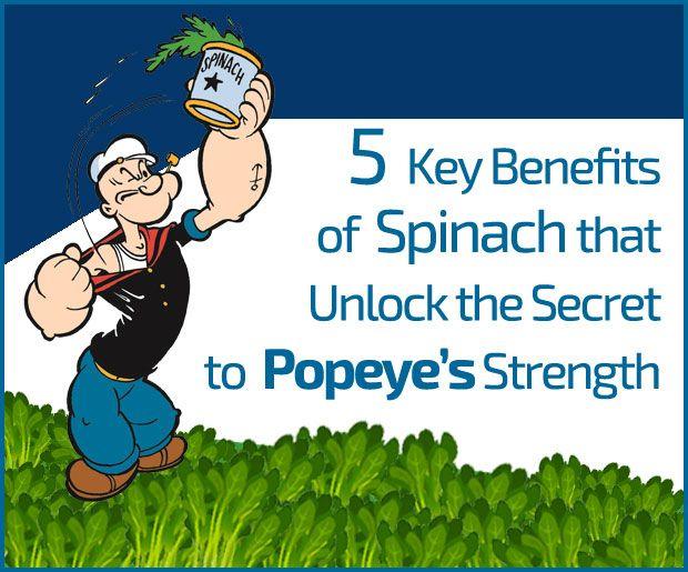 5 Les principaux avantages d`épinards qui débloquent le secret de la force de popeye