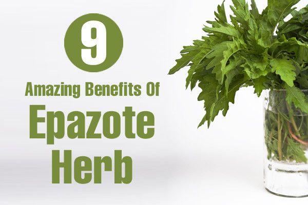 9 Avantages étonnants de l`herbe epazote pour la peau, les cheveux et la santé