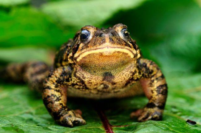 9 Façons d`attirer les grenouilles et les crapauds dans votre jardin