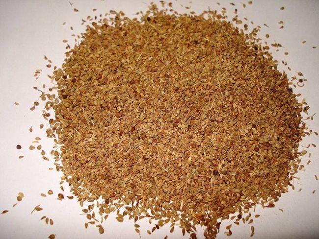 Incroyable avantage pour la santé, les utilisations et les effets secondaires de ajowan (graines de carrom) que vous devez savoir