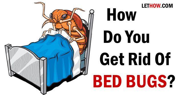 Comment voulez-vous vous débarrasser des punaises de lit?