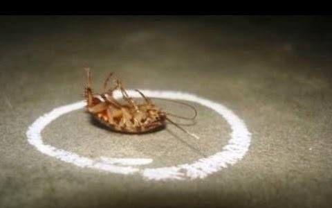 Comment se débarrasser des blattes définitivement de votre maison