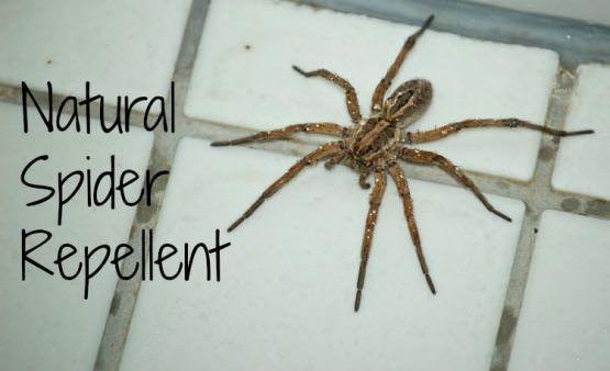 Comment faire répulsif araignée à la maison?