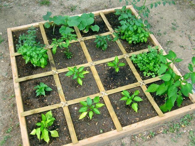 Comment planifier un pied carré potager - la meilleure façon de cultiver des légumes en abondance