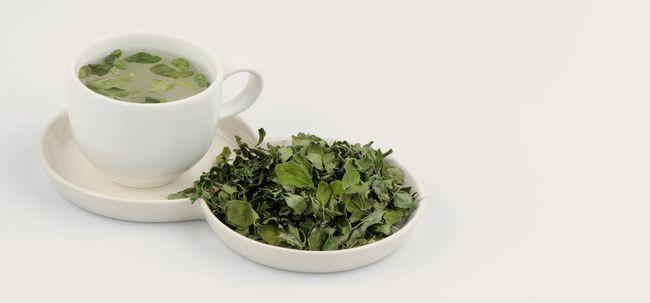 Moringa thé - comment préparer et quels sont ses avantages?