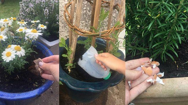 De manière étrange d`utiliser 21 articles ménagers dans votre jardin